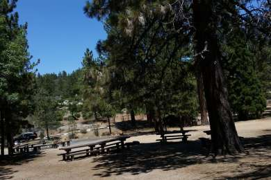 Lots of picnic tables but very little shade.
