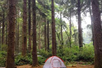Abalone Campground is definitely the best campground at this park. Huge towering pine trees! No redwoods but it's got that deep forest feel.