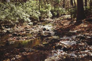 A shallow part of rock creek, near the campground.