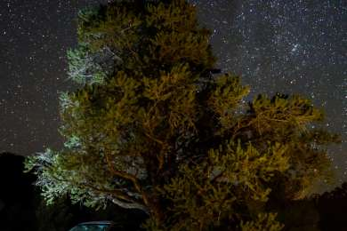 "Slumberjack, the Sleeping Forester under a starry sky. #imaslumberjackandimokay #isleepallnightandidriveallday #slumberjackthesleepingforester"""