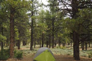 King Creek Campground