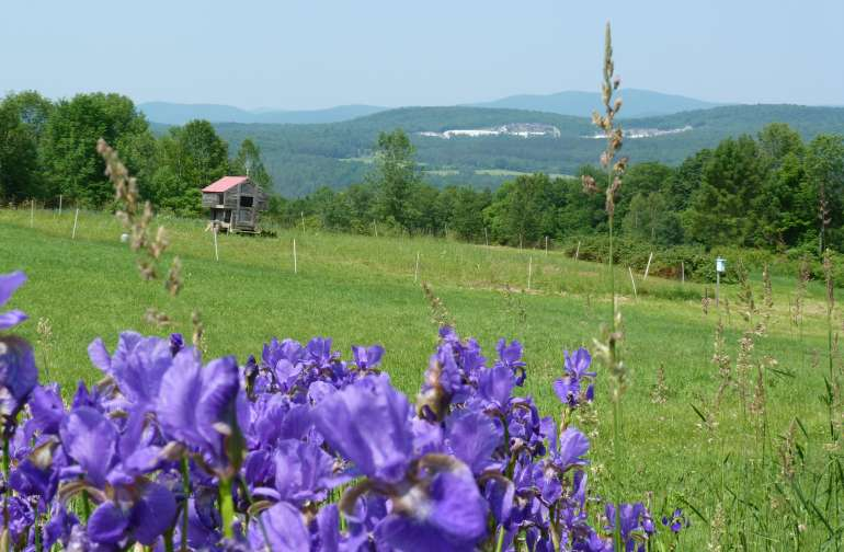 There are magnificent views of the Vermont Green Mountains from all over the farm.