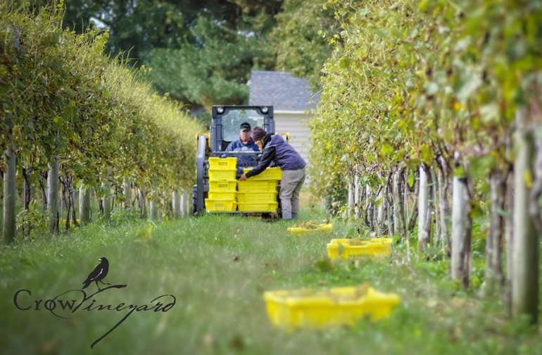 Harvest season is September and October.  Join in the fun.