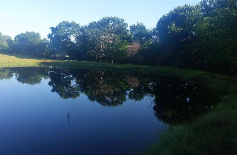 The pond!