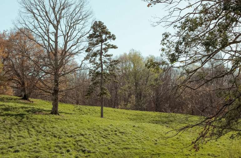 A vast amount of greenery and trees are spread across the hills on this property.