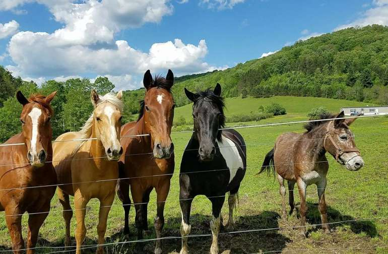 Five of our equines at Triple Dream Farm enjoying the warm weather.