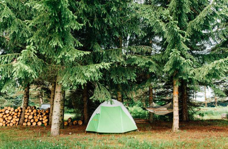So cozy! Stayed pretty dry during the rain camping under these trees!