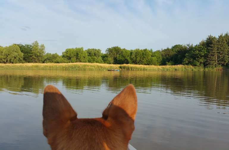 Dogs eye view of the wetlands.