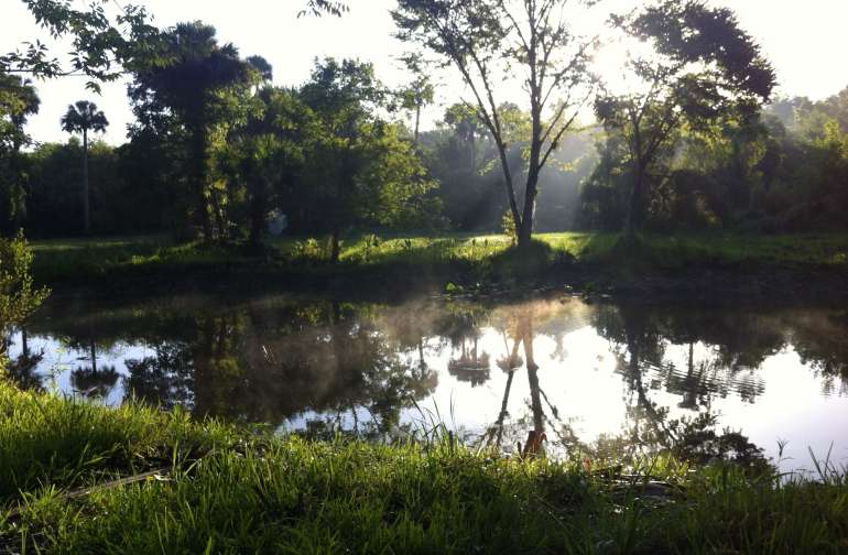 Pond in the morning