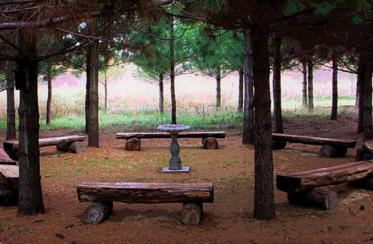 woodland seating circle