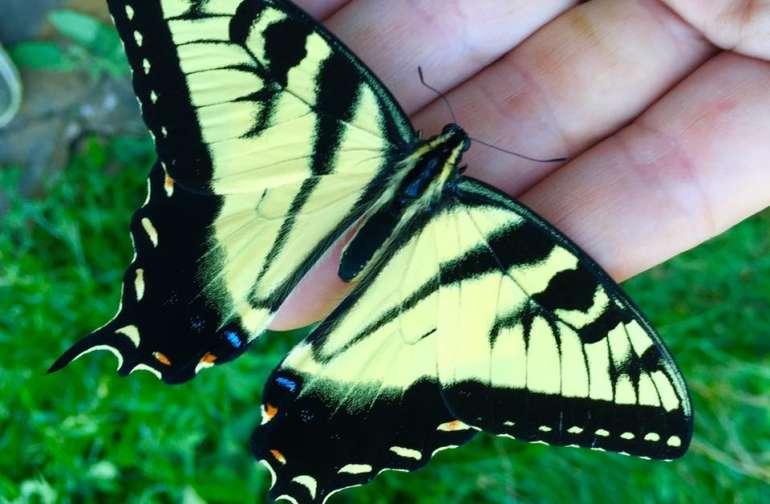 Lots of butterflies around here.