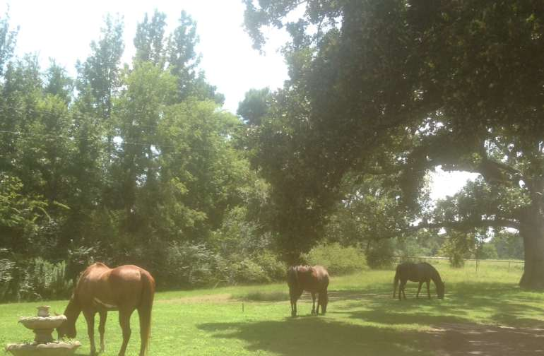 Watch the horses graze and play....