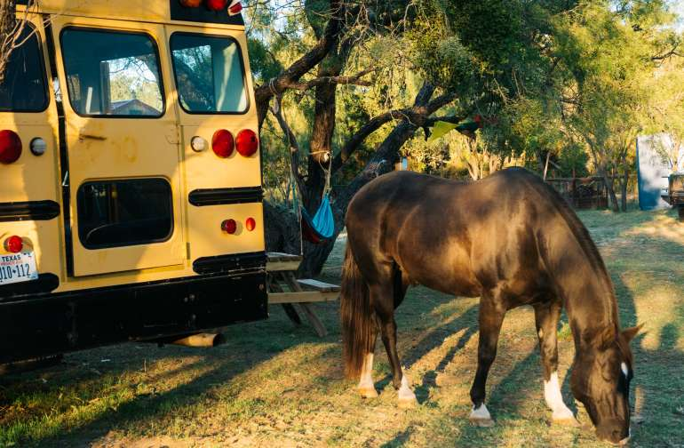 Jay will be a constant companion during your stay at JH Ranch.