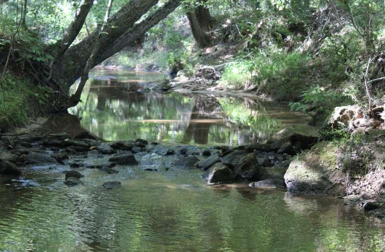 Chickasaw Creek in Summer