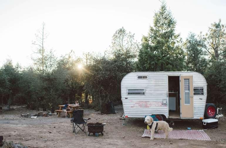 dog animal lodging