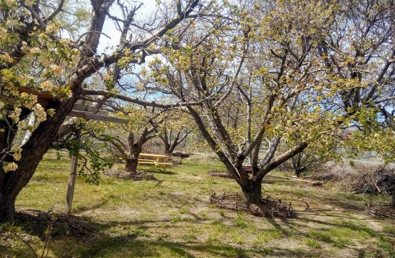 springtime in the orchard oasis campsite