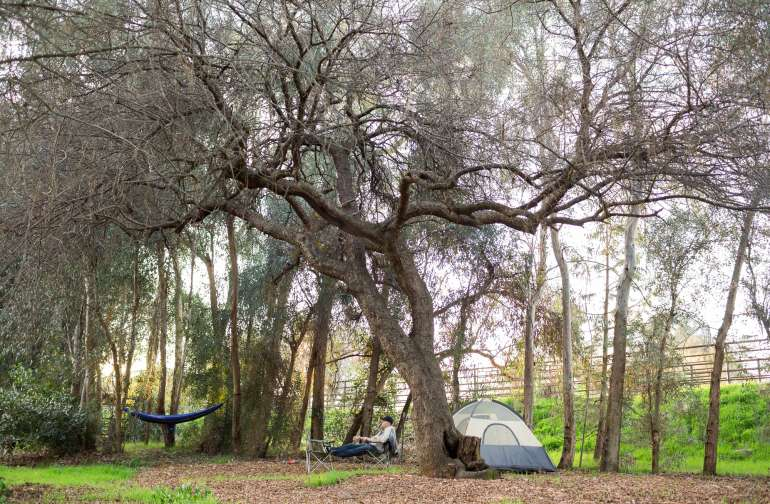 Tent camping.  There's a large area under an oak that you can pitch your tent wherever you like!