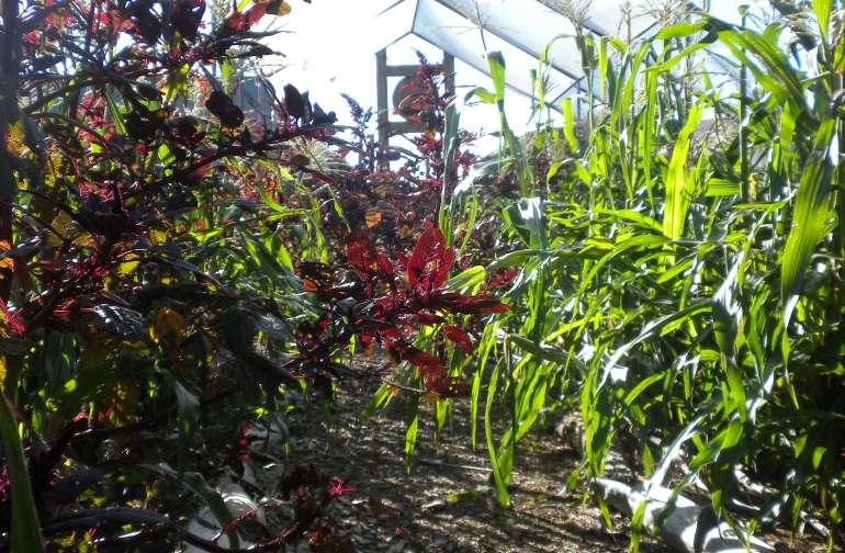 The abundant field in Autumn.
