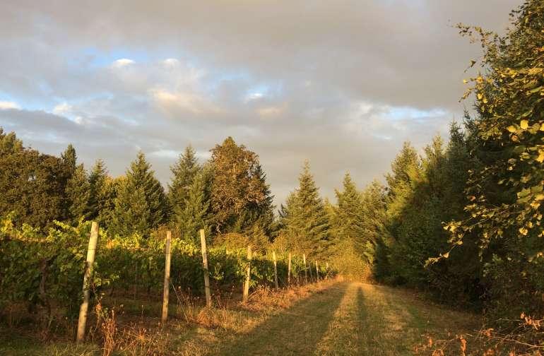 Vineyard Camp