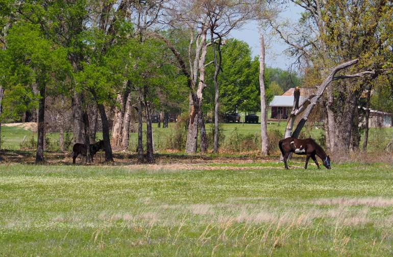 Wildwood Ranch