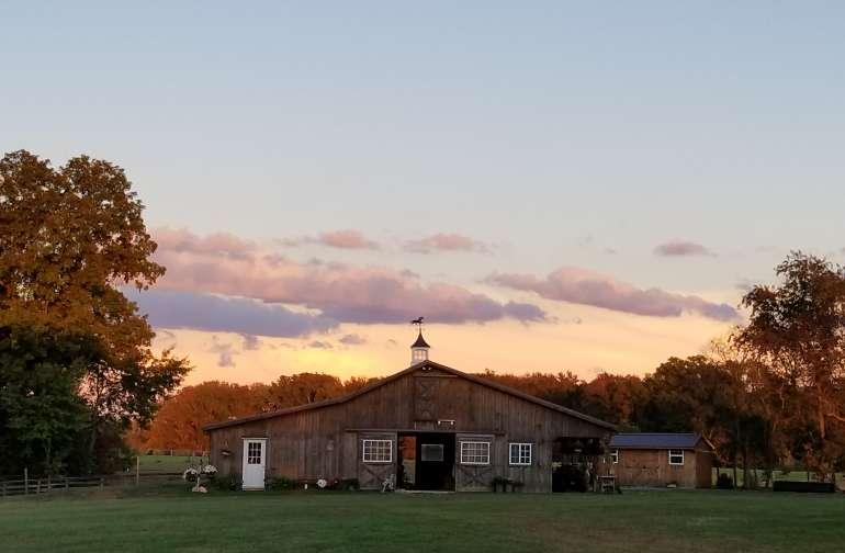 Silver Fern Farm