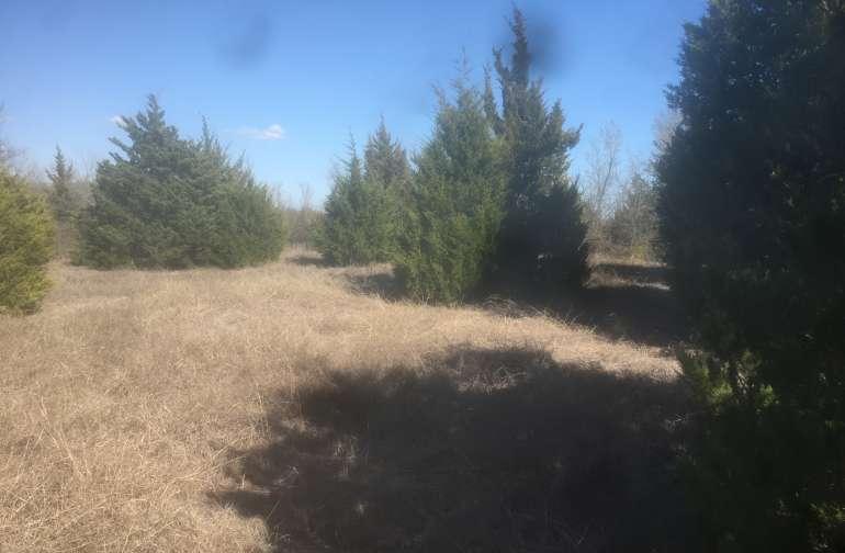 Rustic cedars