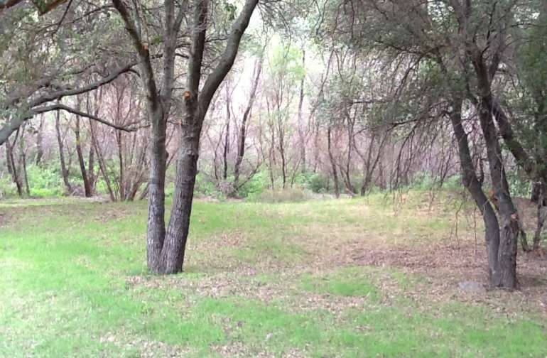 Trees along walking trails and outside areas surrounding main campground