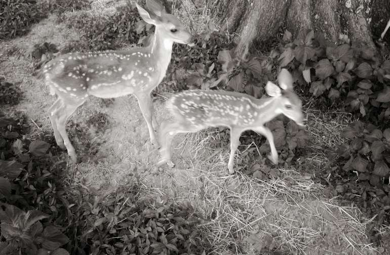 Dancing Deer Meadow