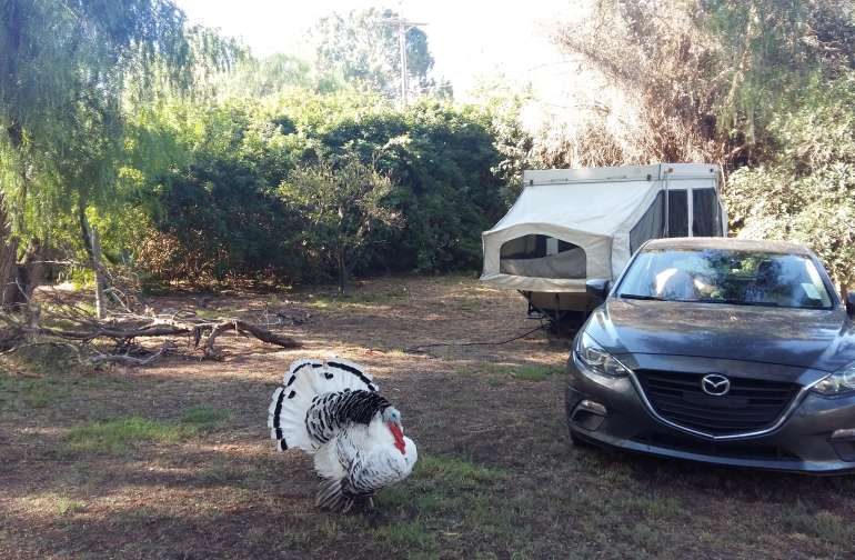 The 30 Best Campgrounds Near San Diego California