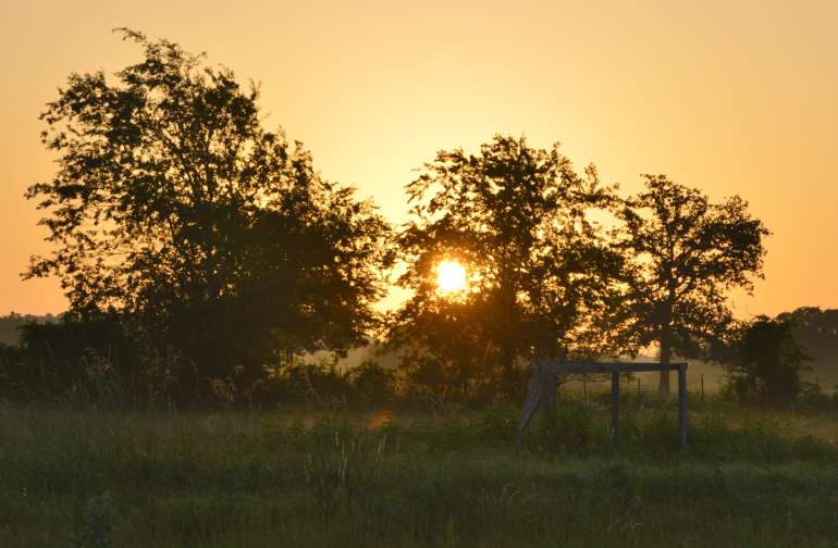 A daily joy, watching the sun come up.  Trees on the East side of the farm make it so pretty.