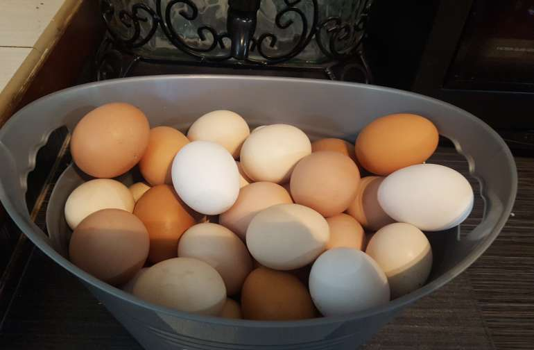 fresh eggs in the morning
