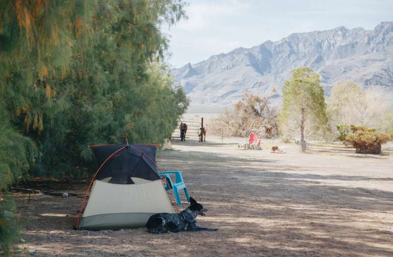 tent mountain dog