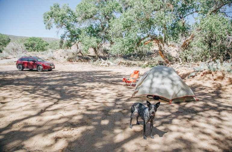 tent dog animal