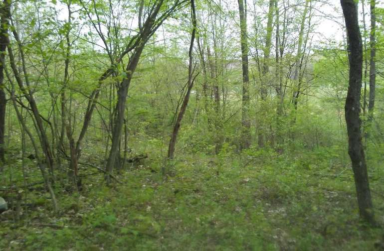 Pitch a tent in this secluded wood lot total privacy, wood provided when available, spring running water short distance away.