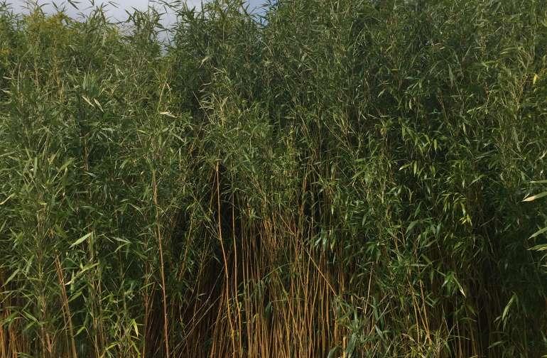 Bamboo everywhere!