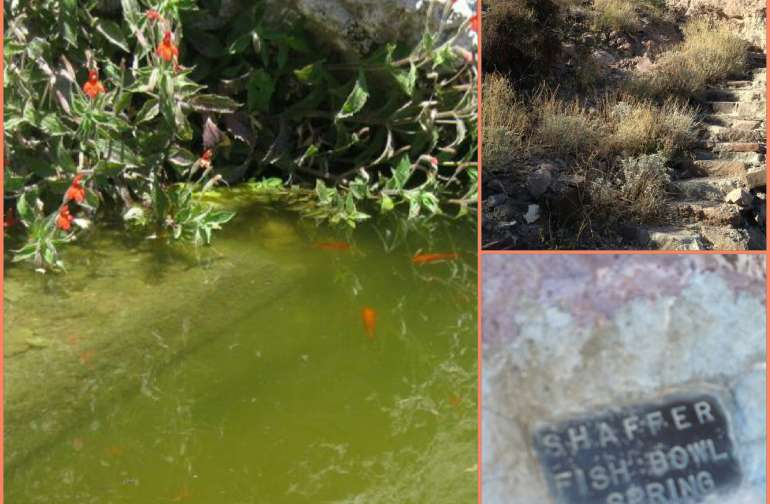Goldfish Bowl Springs AKA Shaffer fishbowl is located 11 miles from camp.