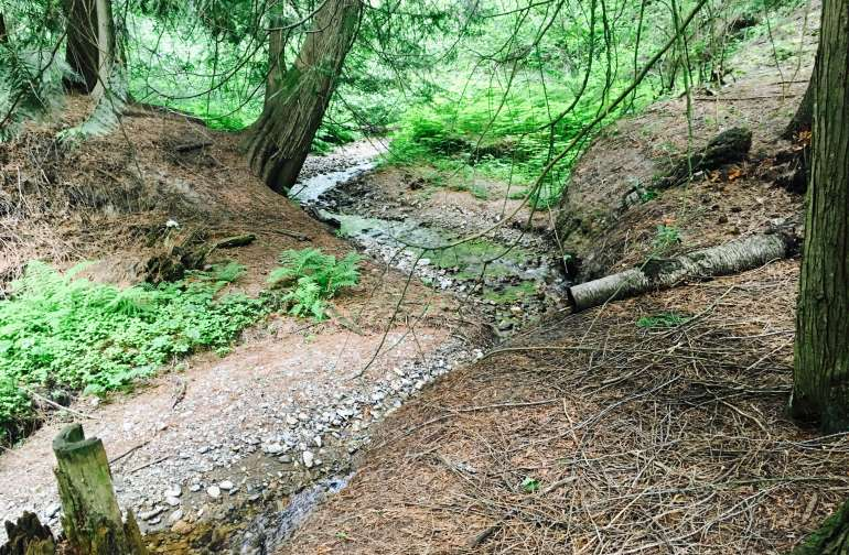 Magical stream-side camping.