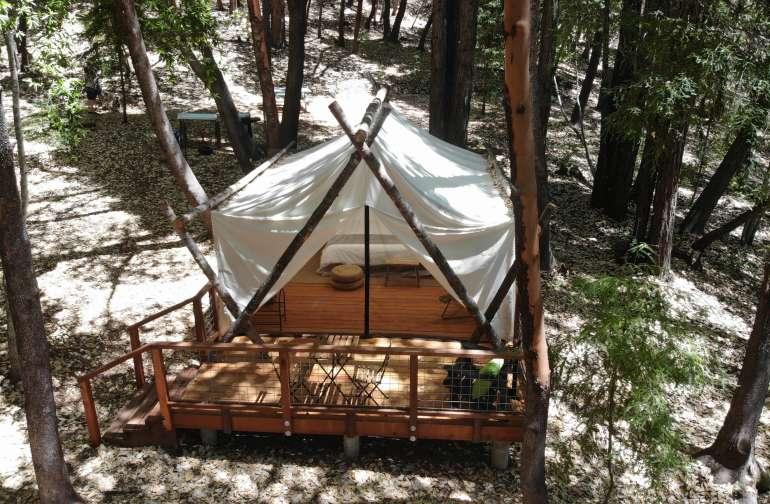 Shelterwood- Acacia Tent