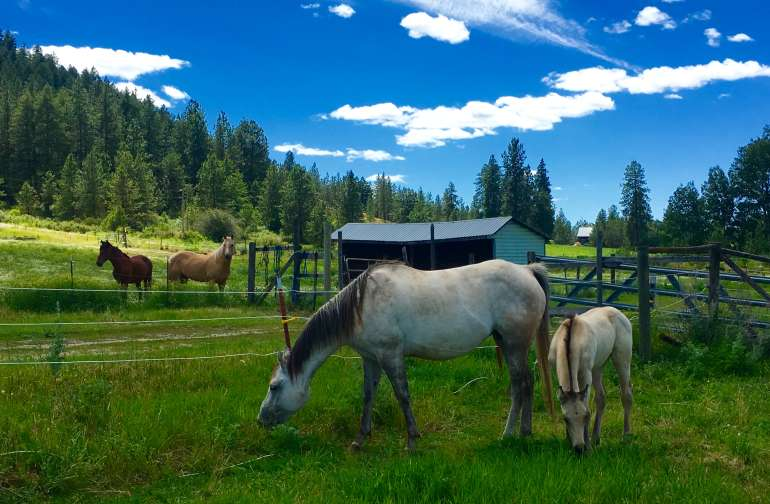 Horses all around.. Camp sites have direct views..