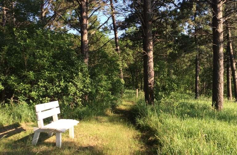Fun Sun Trail-Tent or Hammock Spot