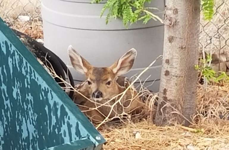Random wildlife this summer.