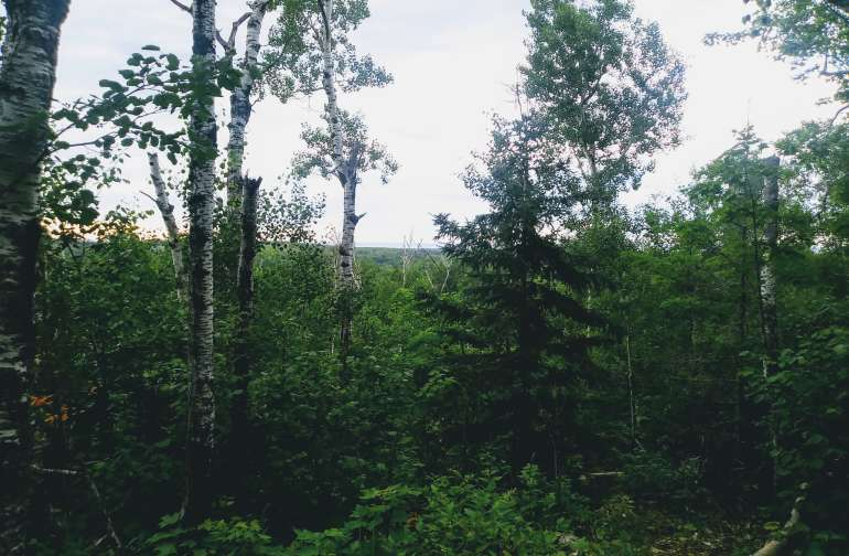 View in the treetops