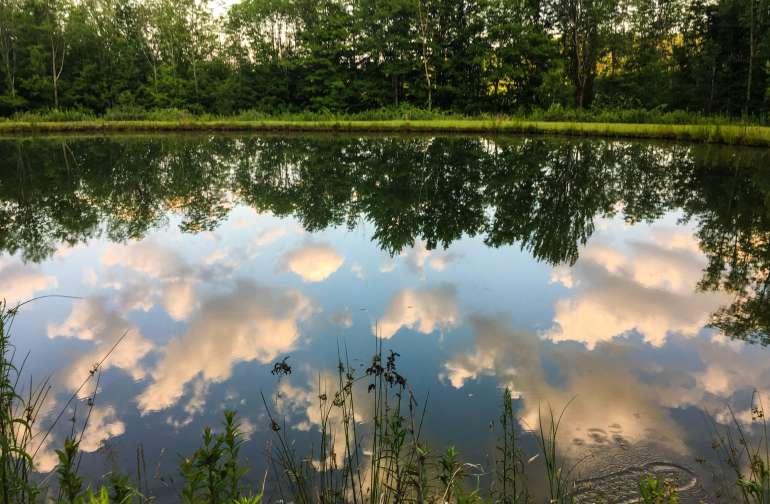 Pond # 2
