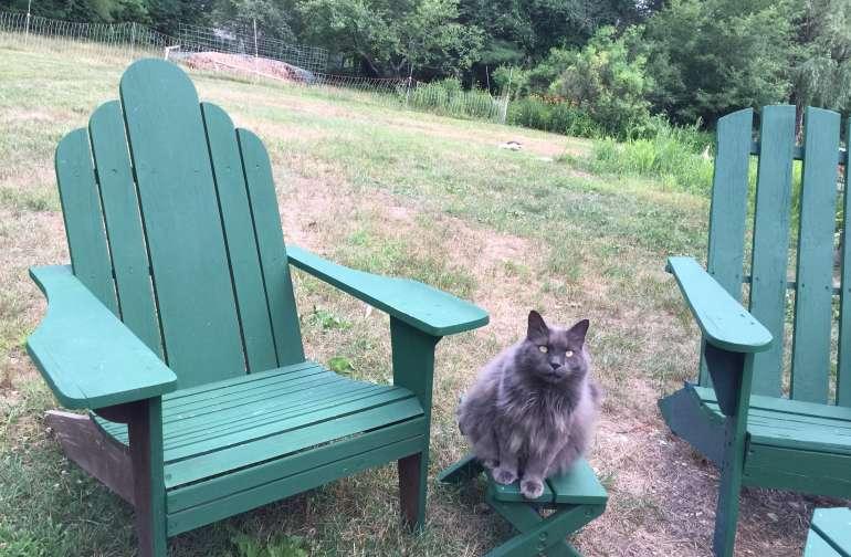 Resident cat, Tassa
