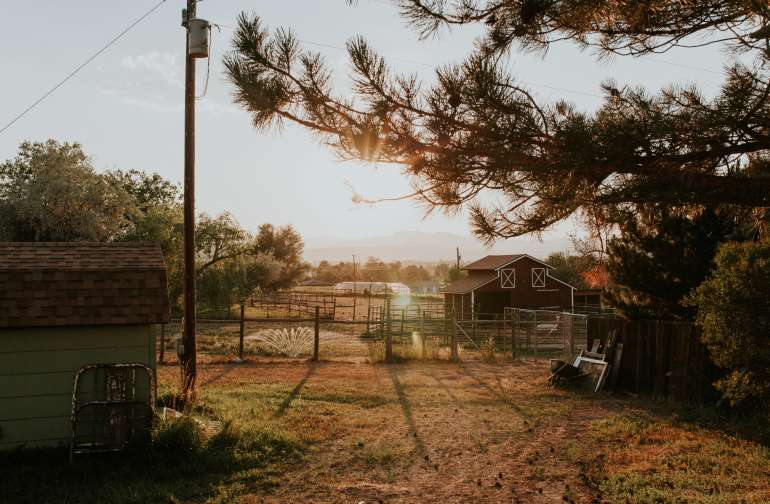 Mini, Alpaca Ranch