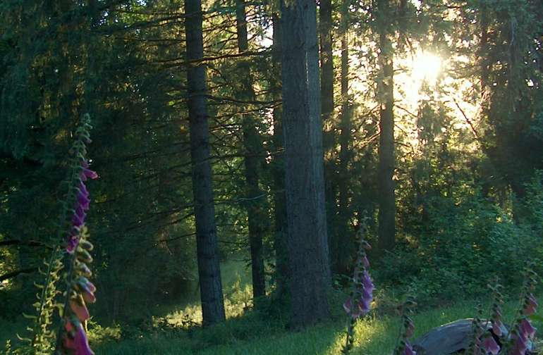 Looking down into the meadow at sunrise.  The tent area is at the bottom of this hill.