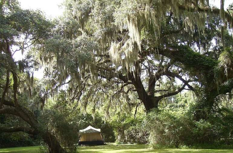 The champion Live Oak trees dwarf visitors