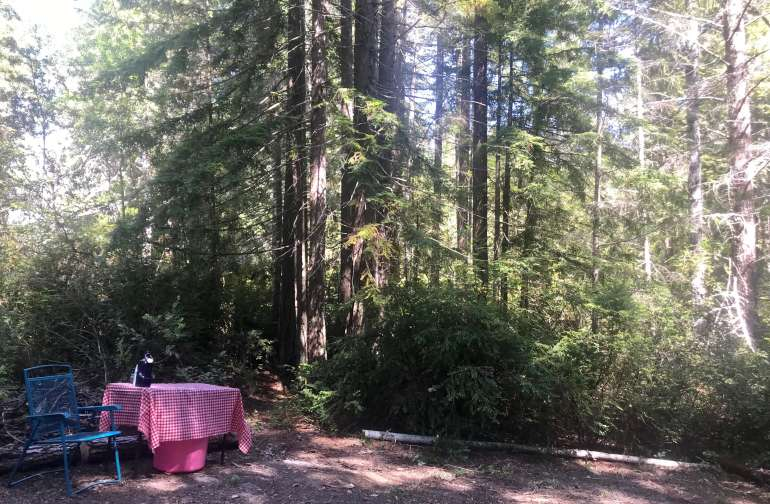 Site #1.  This provides a great space to put up a tent and even a hammock.  You are surrounded my trees and very close to the shower/restroom.