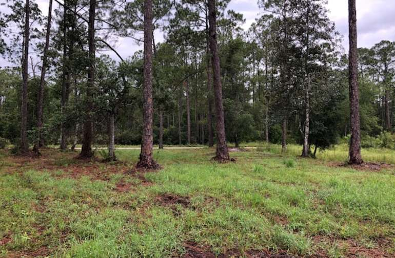 Private Cleared Woodsy Lot on Creek