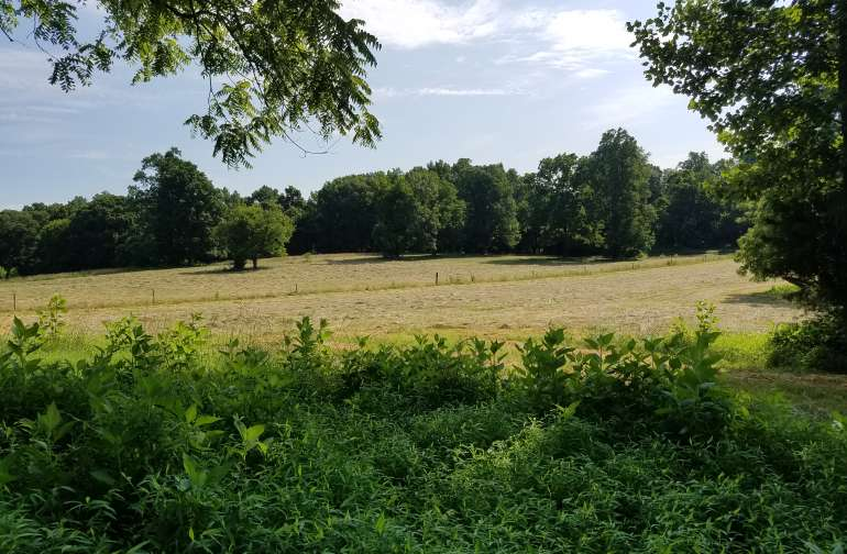 20 Acres on Rushing Wooded Creek